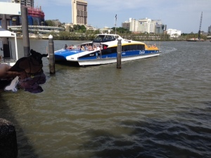 Flat Buddy about to catch City Cat on Brisbane River.