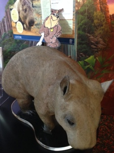 Warren Wombat takes Flat Buddy for a ride