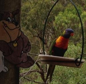 Rainbow Lorikeet is having a swinging good time with Flat Buddy.