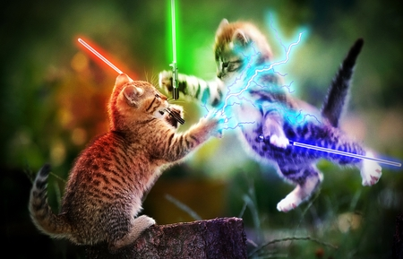 cats awesome lightsabers cat animals wallpapers kitty desktop wars star tour hd starwars animal meow kitten war background cute laser